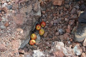 Backed volcanic Apples