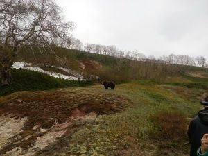 Bears of the Valley of Geysers (5)