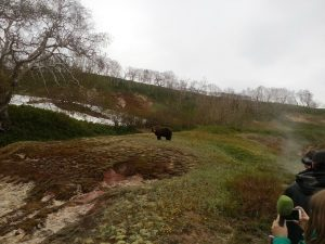 Bears of the Valley of Geysers (6)