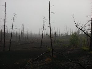 The Dead Forest (14)