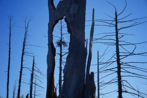 The Dead Forest (21)