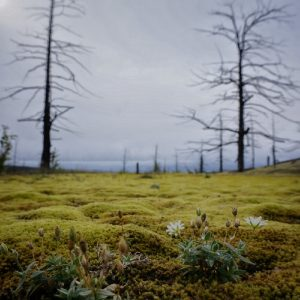 The Dead Forest (26)-min